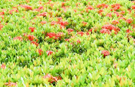 Art texture green leaf background .