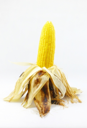 Corn roasted thai style isolate. photo