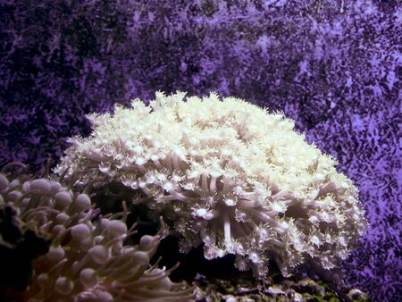 Coral in a fish tank. Stock Photo - 21976092
