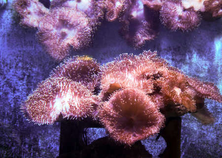 Coral in a fish tank. Stock Photo - 24840423