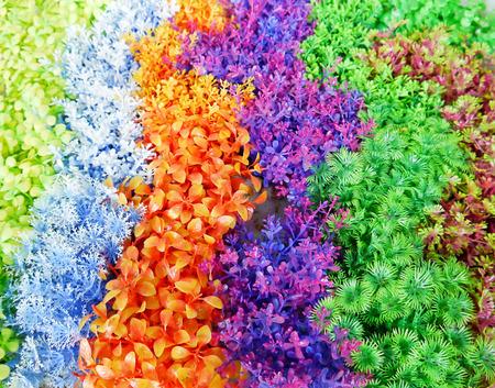 plantas acuaticas: Plantas de agua de colores para los muebles de pecera. Foto de archivo