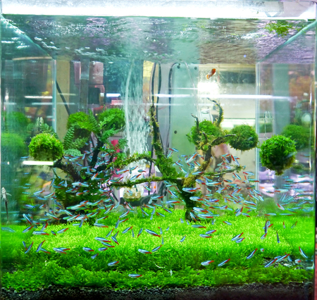 A green beautiful planted tropical fish tank. photo