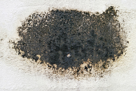 Black mold on cement board.