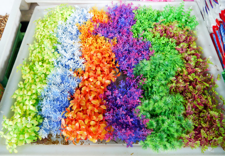 Colorful furniture water plants for fish tank. Stock Photo - 24845049