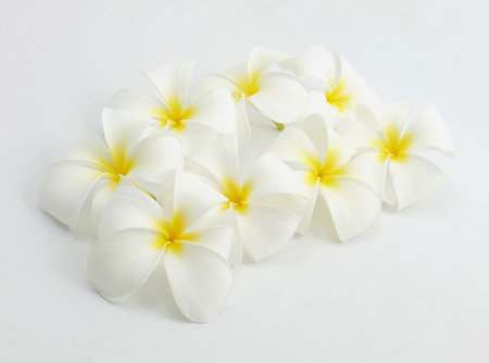 White flower on white background isolate. Stock Photo