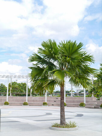 Palm trees in park Thailand.