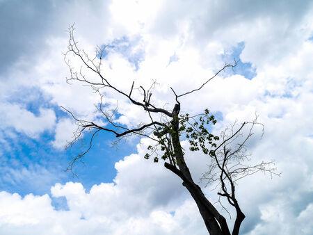 Branch on blue sky art background.
