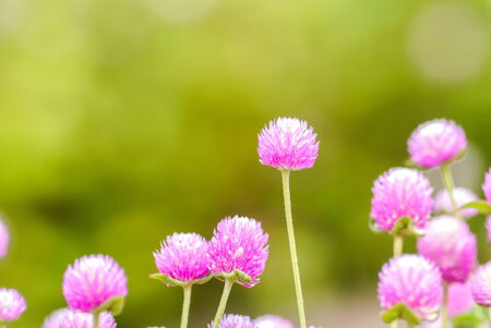 Colorful flower in the park. Stock Photo