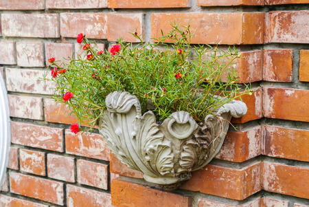 Flower pot on wall Stock Photo