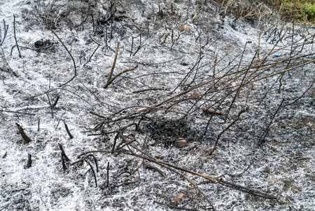 After wildfire grass in Thailand.