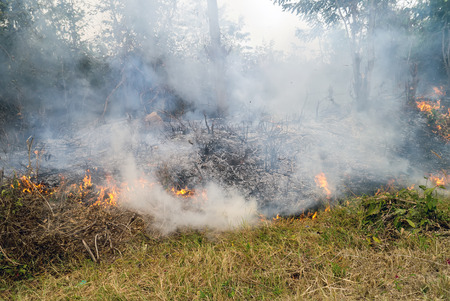firestorm: wildfire grass in Thailand.