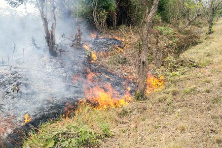 wildfire grass in Thailand.