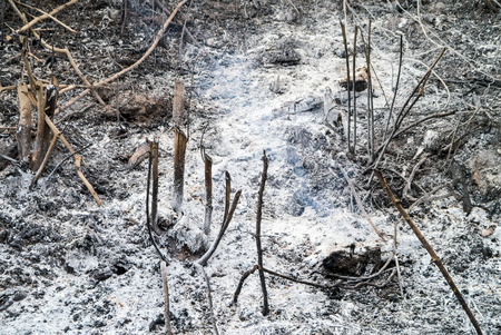 firestorm: After wildfire grass in Thailand.