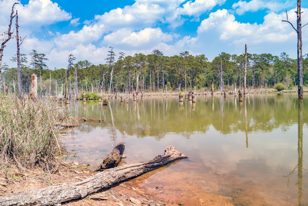 degraded: Degraded forest in Dam Thailand.