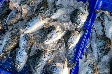 fish market: Fish in fish market Thailnad.
