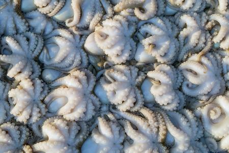 fish market: Octopus in fish market Thailnad.