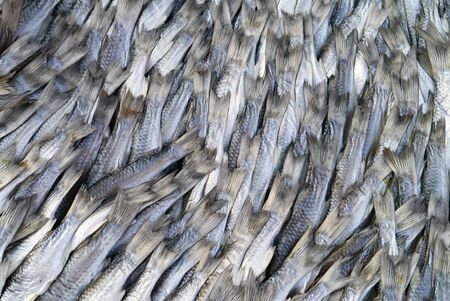 fish market: Salted fish in Fish market Thailand.