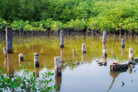 wade: Old Poles in water.