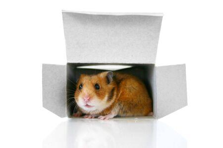 Inside the box photo