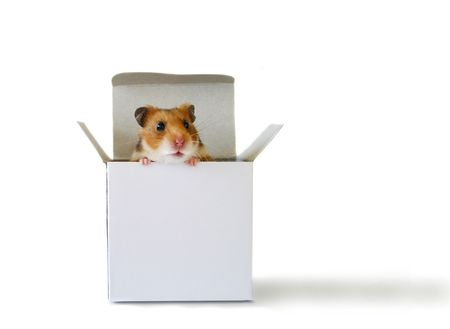 hamster: Inside the box Stock Photo