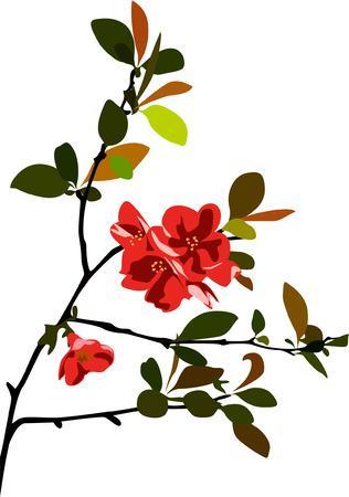 ramo di ciliegio: ramo di ciliegio Vettoriali