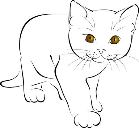 undomesticated cat: kitten Illustration