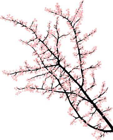 bomen zwart wit: kers tak met roze bloemen