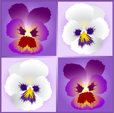 pansy: pansy flowers