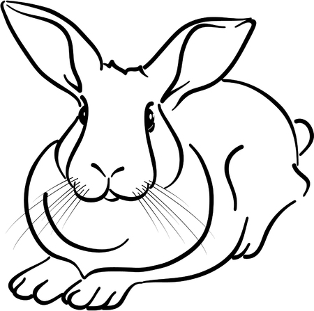sketch out: rabbit