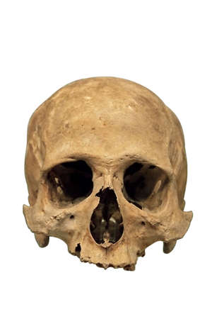 Skull isolated over a white background