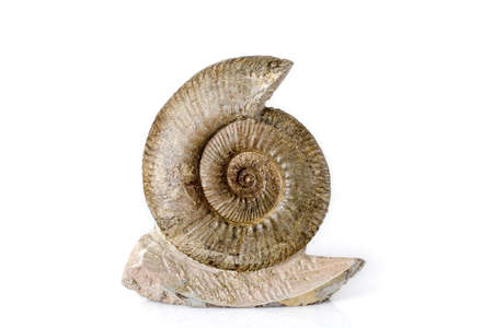 prehistorical: Ammonite fossile isolatedover a white background Stock Photo