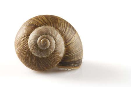 babosa: Snail aislados durante un fondo blanco
