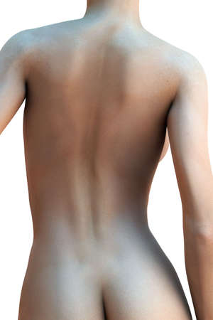 anatomy naked woman: Womans back isolated over a white background (3D render) Stock Photo