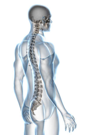 back bone: X-ray male anatomy isolated over a white background