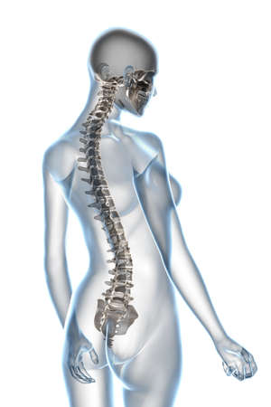 vertebra: X-ray female anatomy isolated over a white background