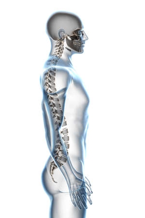 vertebra: X-ray male anatomy over a white background Stock Photo