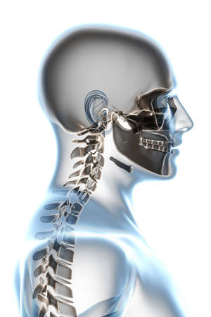 X-ray head anatomy over a white background