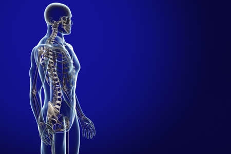 skeleton: X-ray male anatomy over a blue background