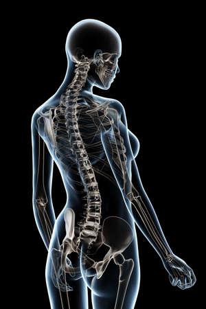 the vertebral spine: X-ray female anatomy over a black background Stock Photo