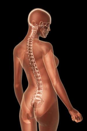 anatomia humana: X-ray anatom�a femenina sobre un fondo negro