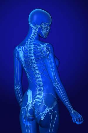 vertebra: X-ray female anatomy over a blue background