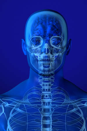 X-ray head anatomy over a blue background photo