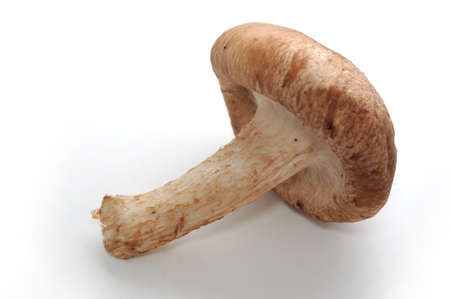 one mushroom on white background