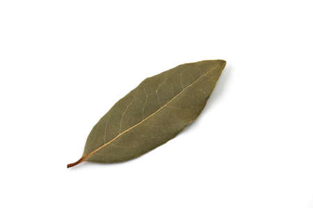 leaf of laurel laurier isolated on white background Banque d'images - 124927826