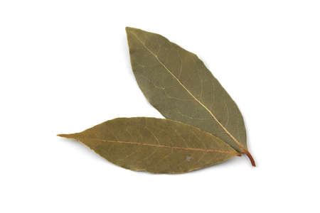 leaf of laurel laurier isolated on white background