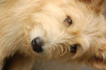 ojos tristes: Un perro lindo con los ojos tristes