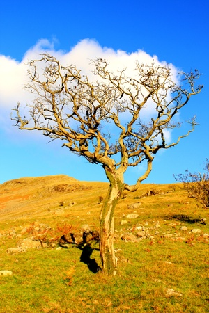 Dead tree in Lake district
