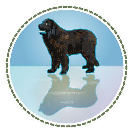 cane terranova: cane Terranova