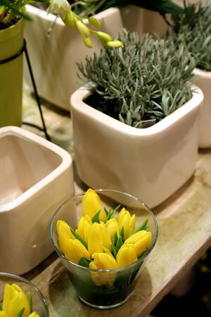 spring yellow tulips with first garden plants photo