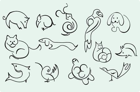 kanarienvogel: Home Tiere